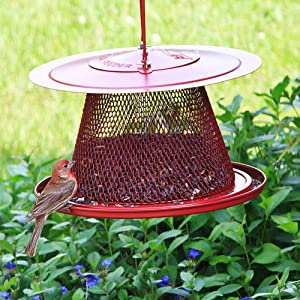 No No Red Cardinal Wild Bird Feeder