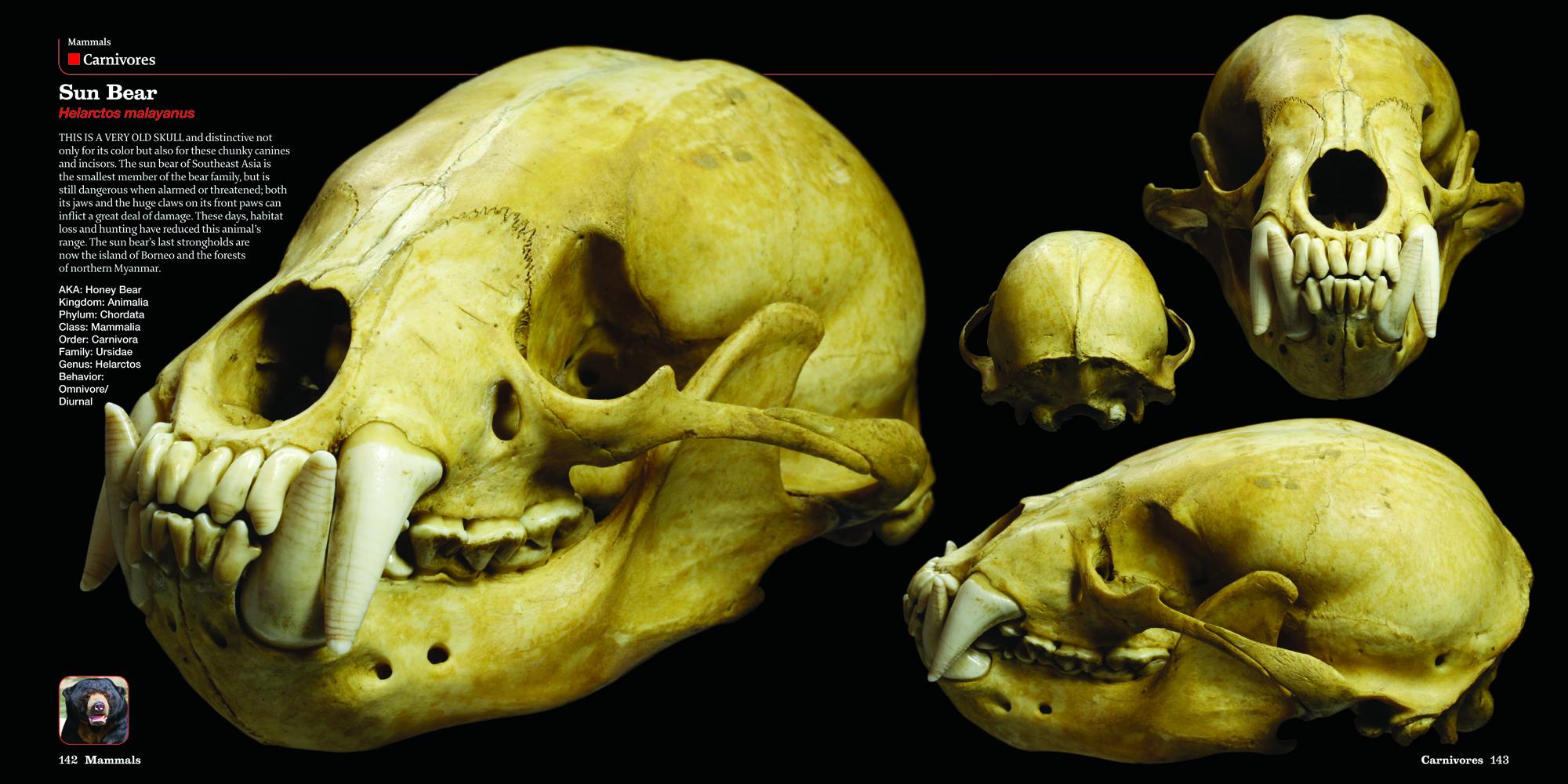 Amazon Com Skulls An Exploration Of Alan Dudley S