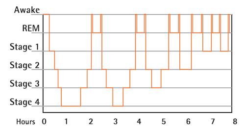 normal sleep diagram sleep cycle diagram