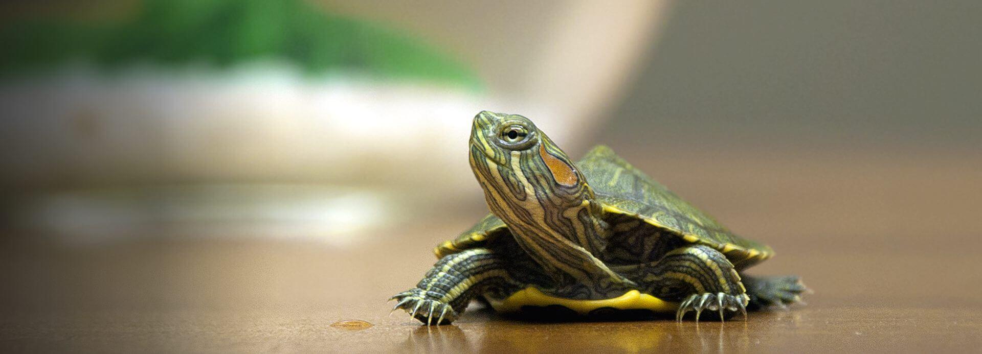 Amazon Com Reptiles Amp Amphibians Pet Supplies Food