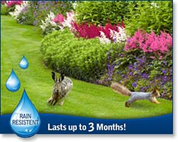 Rain resistent / last up to 90 days