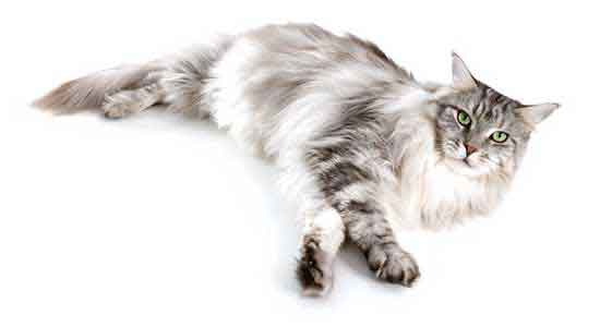 How Should Dry Cat Food Be Stored